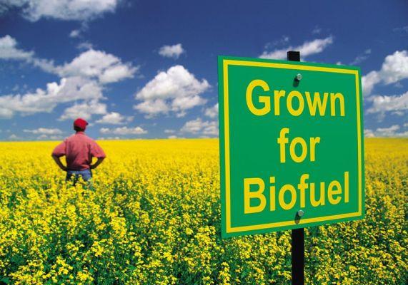industri biofuel alternatif bagi sumber petrol dunia