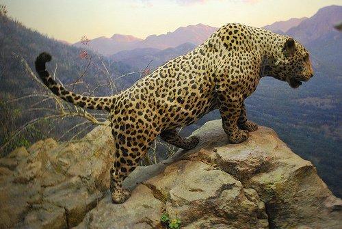 jaguar gergasi