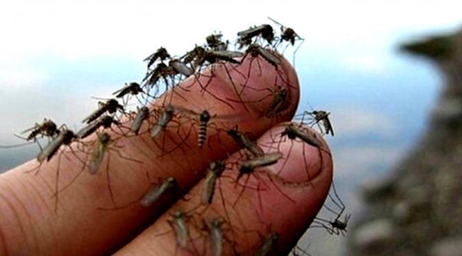 jangan biar diri anda dikerumuni nyamuk