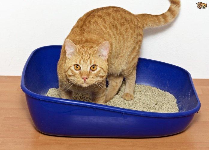 jangan curi kucing anda punya nanti dia marah ambil pasir baru untuk hilangkan bau asap rokok dalam kereta