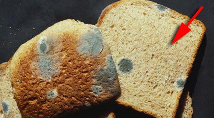 jangan sesekali makan bahagian bersih pada roti yang berkulat