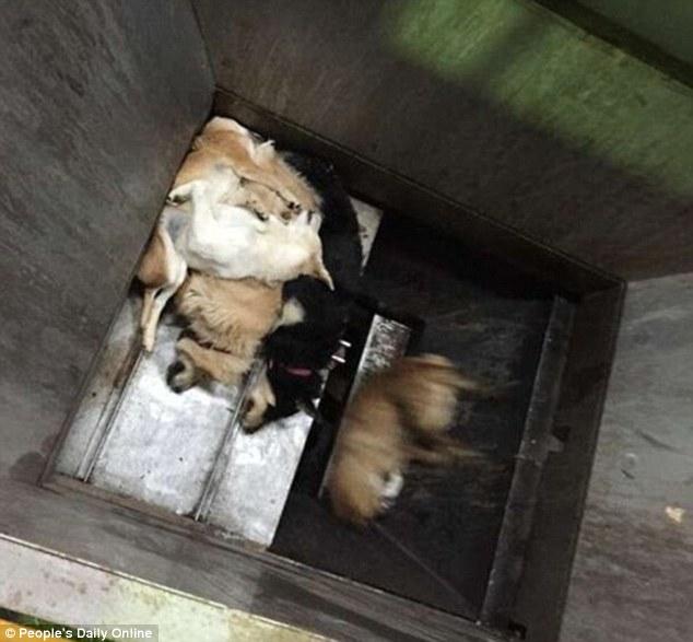jepun dengan kekejaman haiwan paling dahsyat 2