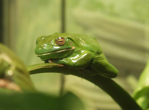 katak 8 haiwan dengan tabiat tidur yang pelik dan unik