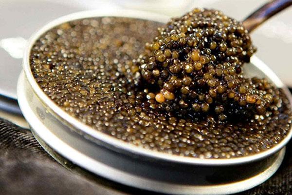 kaviar ikan sturgeon hitam dalam mangkuk