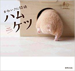kawaisa ni monzetsu hamuketsu