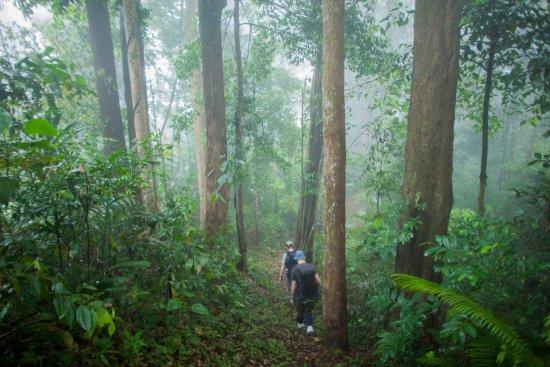 kawasan hutan kinabalu