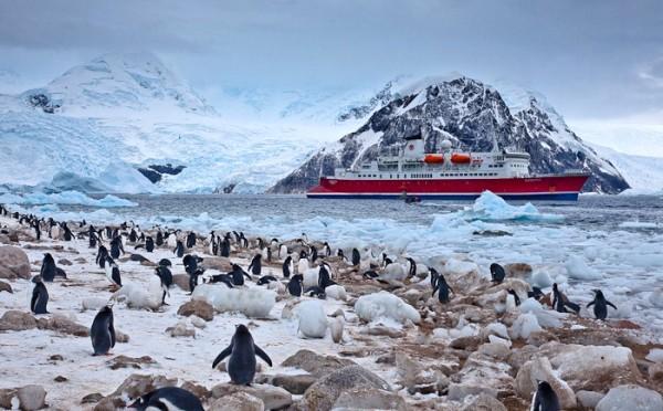 kehidupan di antartika 173