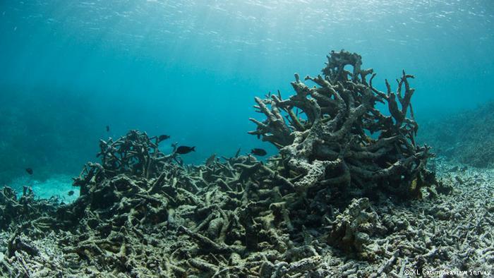 kemusnahan terumbu karang
