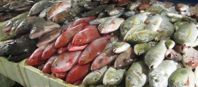 kenali jenis dan nama ikan