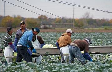 kerja ladang di korea selatan