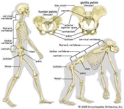 komposisi badan manusia dan haiwan 297