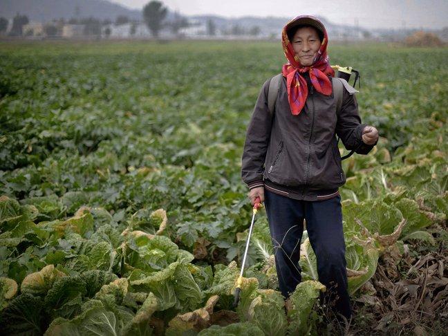 korea utara petani wanita
