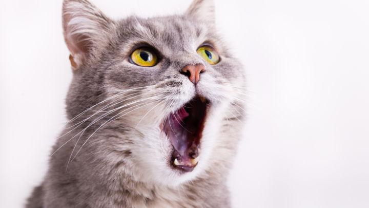 kucing 659