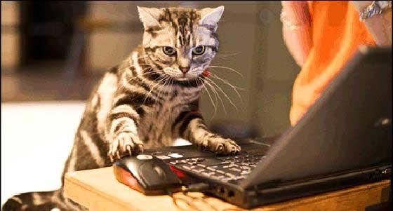 kucing bijak 210