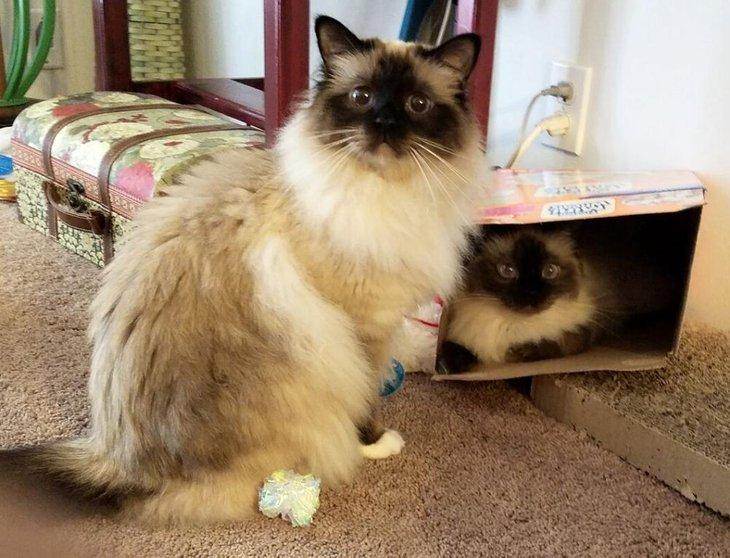 10 Baka Kucing Paling Cantik Dan Comel Dalam Dunia Iluminasi