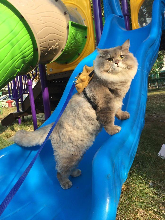 kucing bone bone bermain di taman