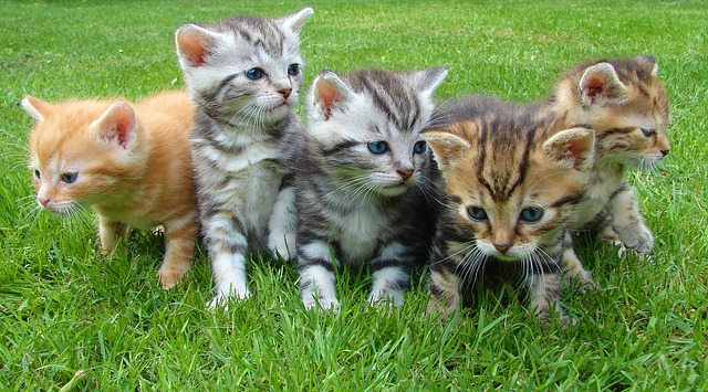 kucing comel 193