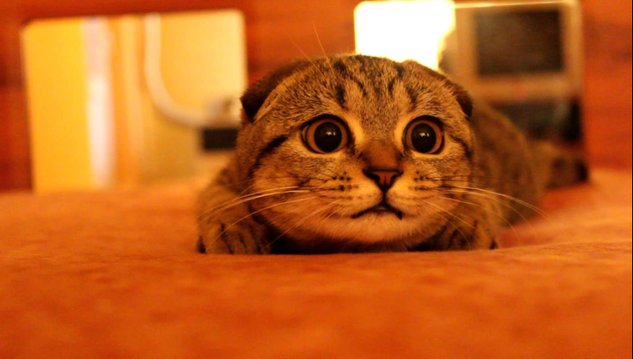 kucing comel cute