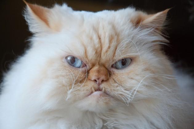 kucing juga mempunyai rasa stres