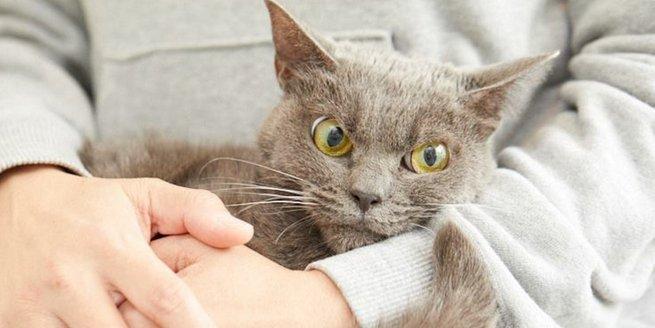kucing marah perengus