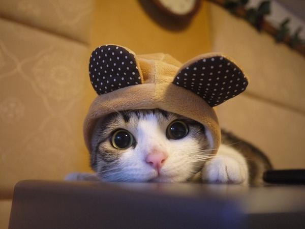 kucing paling comel haiwan peliharaan