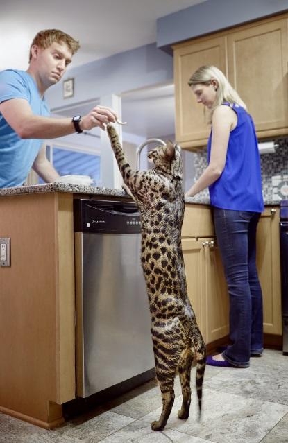 kucing paling tinggi di dunia