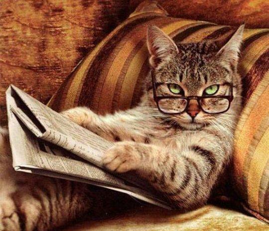 kucing pandai