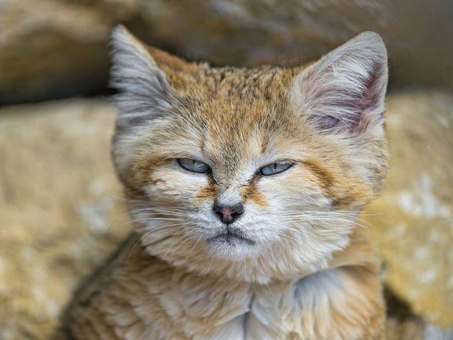 kucing sila share artikel ini kepada rakan rakan anda