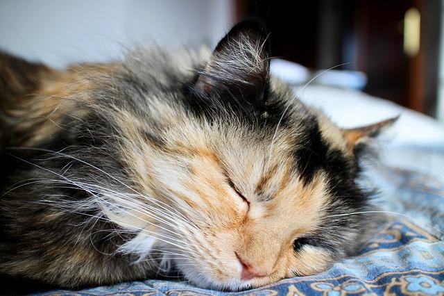 kucing tidur 179