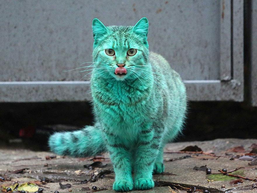 kucing warna hijau