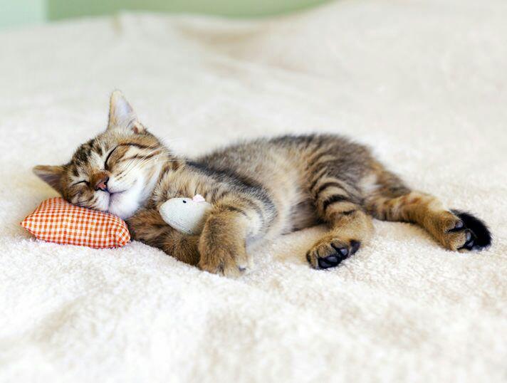 kucing yang masih kecil boleh tidur sehingga 22 jam sehari