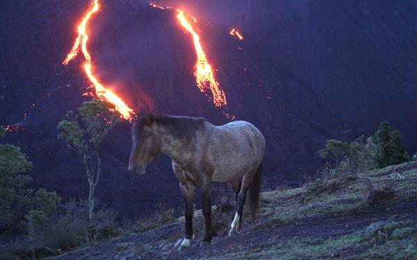 kuda gunung berapi