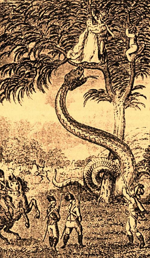 lagenda anaconda gergasi