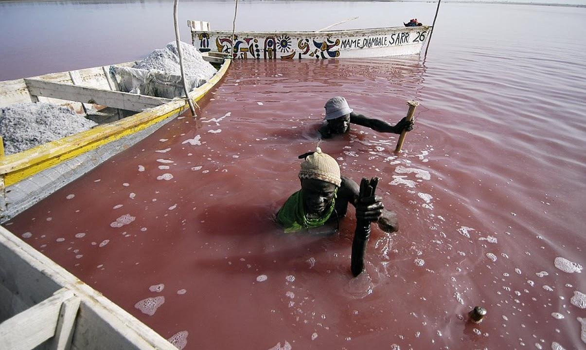 lake retba tasik pink seperti laut mati yang terkenal di senegal