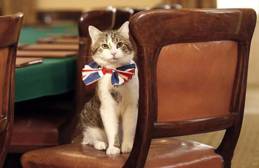 larry chief mouser uk