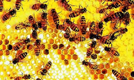 lebah adalah spesis paling bernilai di dunia