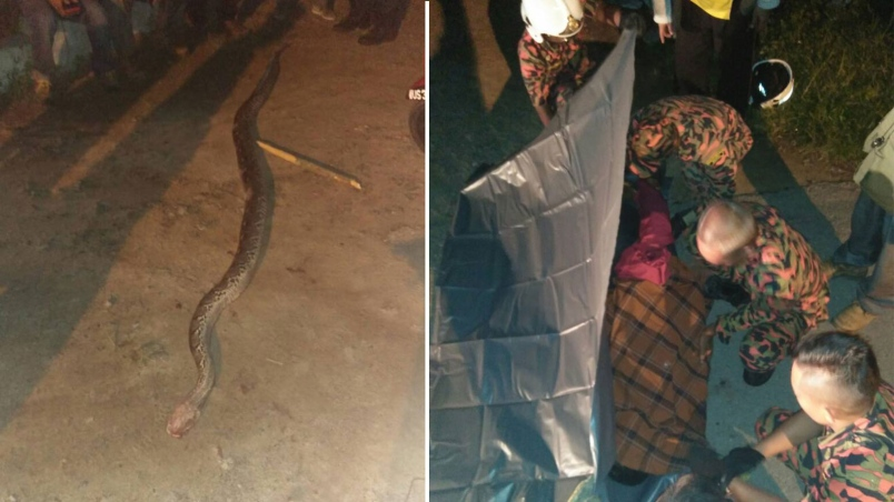 lelaki maut dibelit ular sawa 2 4 meter di kuala langat