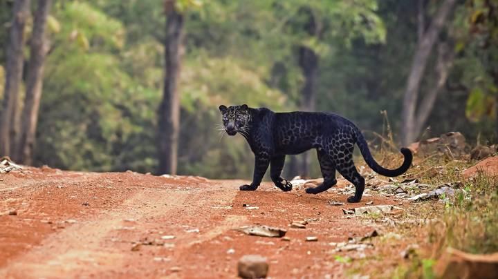 leopard cannot change its spot