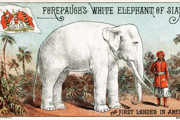 lukisan gajah putih