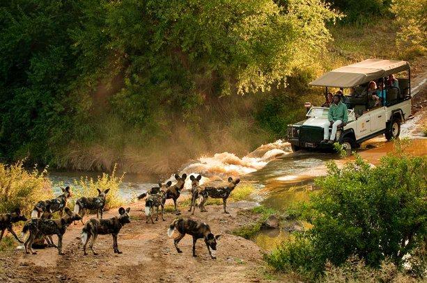 madikwe game afrika selatan hyena