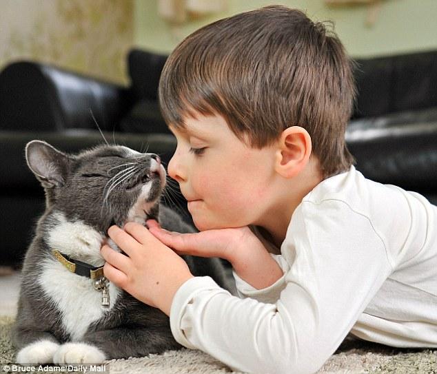 main dengan kucing