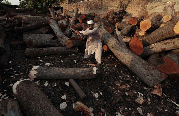 memulihkan semula hutan akibat penebangan yang berleluasa
