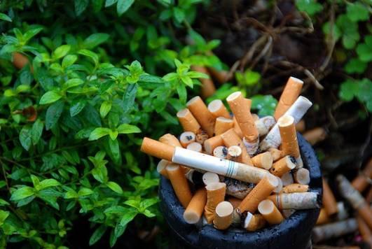 merokok membahayakan manusia haiwan dan juga tumbuh tumbuhan