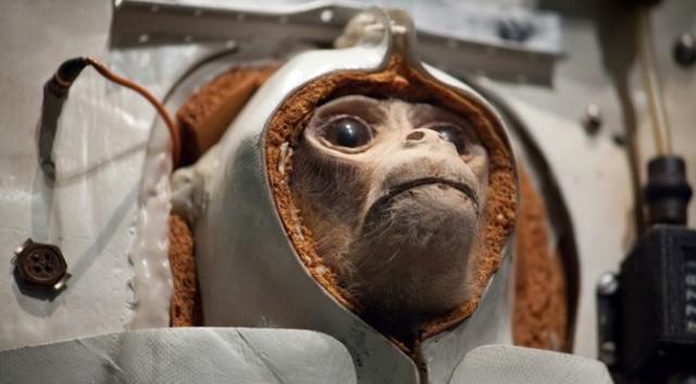 monyet ke angkasa