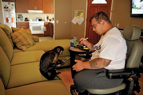 monyet tolong manusia