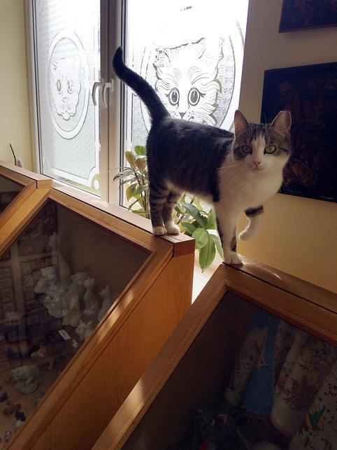 muzium kucing yang perlu dilawati oleh peminat kucing 2