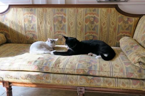 muzium kucing yang perlu dilawati oleh peminat kucing kattenkabinet