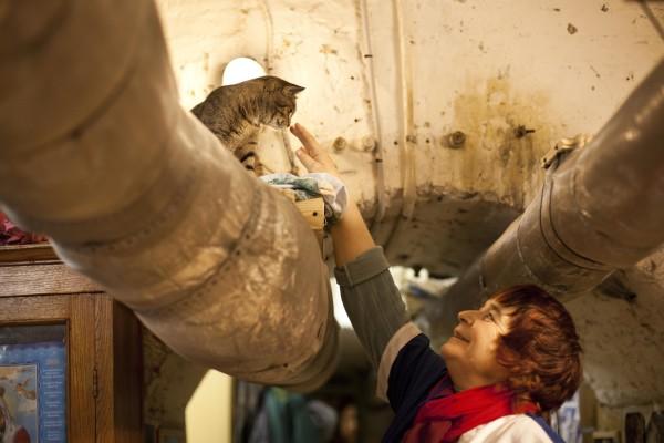 muzium kucing yang perlu dilawati oleh peminat kucing rusia hermitage