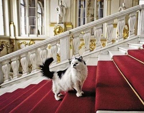 muzium kucing yang perlu dilawati oleh peminat kucing rusia