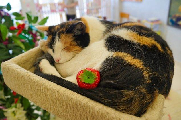 muzium kucing yang perlu dilawati oleh peminat kucing